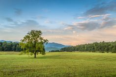 Morning at Cades Cove from The Great Smoky Mountains National Park..