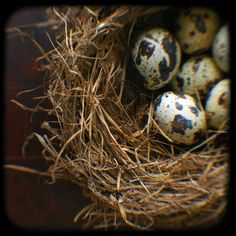 eggs http://www.pinterest.com/ashaela/feathered-friends-3/