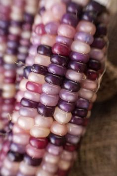 "Amethyst Corn:  The only thing more beautiful than the increasingly popular ""glass gem"" rainbow corn, is this specific variety, which features just pink and purple kernels."