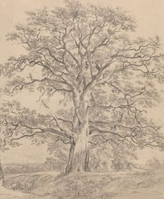 John Constable (Brit. 1776-1837, A Great Oak Tree, ca. 1801, Black chalk with gray wash, 21x 17 cm, National Gallery of Art, Washington