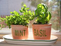 INDOOR GARDENING TIPS AND WHAT TO GROW | Many different herbs can be grown inside with a few small pots and a sunny windowsill.