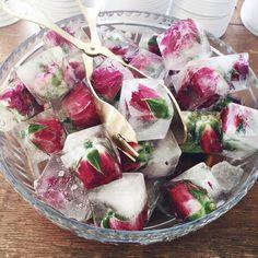 Rosebuds frozen in ice cubes