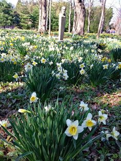 A must see event in Rhode Island - Daffodil Days at Blithewold Mansion