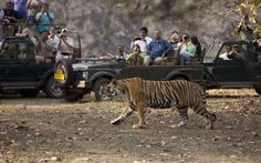 RANTHAMBORE - Wild is love and love is wild, arouse the animal in you, traversing through the woods of Ranthambore, building love in the wilds of green and heartfelt roars. Yes, that's what Ranthambore is all about. Fascinating wildlife safaris, tracing the beasts would ignite the compatibility with your loved one.  With a #package of INR 6,000 (per person on twin sharing), a trip to Ranthambore can extend up to 3 to 4 days.    Visit us at :http://travelkida.com/