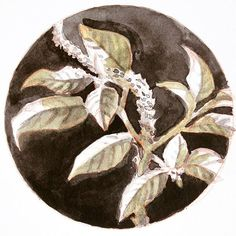 Inktober day 2. #inktober2017 #ink #plant #plantstudy #floral #nature #art #artistsoninstagram #higgensblackmagic #painting    #Regram via @dmk_74