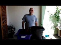 Como plantar frutíferas em vasos de plástico