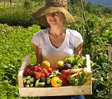 Backyard Vegetable Garden - Eartheasy.com Solutions for Sustainable Living. More Gardening research! yay!