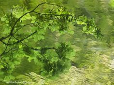 Symphony in green   #jaketalbotinvestigates #JTI #amwriting #writersofinstagram #writerslife #writer #green #water #abstractphotography #abstract #abstractnature #reflection #ripples #psychedelic #art_of_nature #artphotos #naturelovers #photooftheday #amazingcaptures #bestfreeshot #lovethis #ig_nature #naturephotoportal #peaceful #naturelovers_gr #ig_leaves #ig_shotz_trees #lovetrees