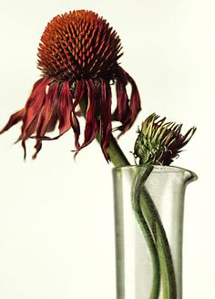 Peter Lippmann :: photographer :: MEDICINAL PLANTS 1 /