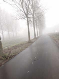 Foggy Morningz