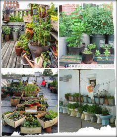 Pon un huerto en tu terraza | El Correo del Sol
