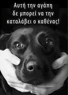 Kindness To Animals, Greek Words, Greek Quotes, Forever Love, Dog Quotes, Peace And Love, Animals And Pets, Minions, Cute Dogs