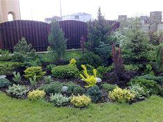 Дачные Дела: Хвойные растения для сада: меры защиты в весенний и зимний периоды