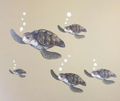 Sea Turtle Family Wall Decals for Kids Room Walls