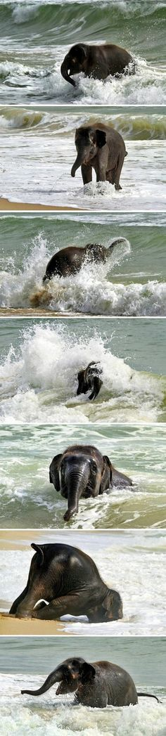 Baby elephant playing in the water. He's so happy!