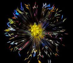 Papaver Fireworks