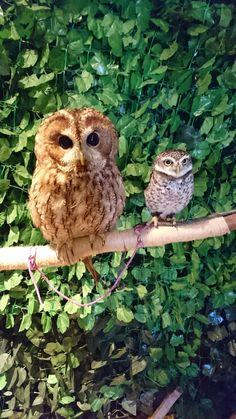 Owl Cafe
