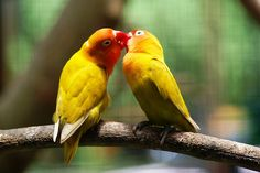 Love Birds  Today you commit  To building your nest Together  Therefore, we got you A bunch of twigs Hair and string And a gift certificate  For worms   ༺♥༻ By Liebe-Vogel