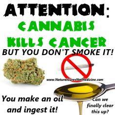 Cannabis Oil kills Cancer.