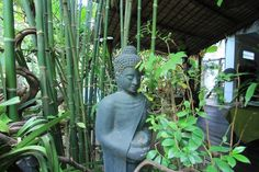 Insider deals this week - great savings for you! To Siem reap - Angkor Wat - Cambodia   www.petitvilla.com  booking@petitvilla.com +855 888 575 389