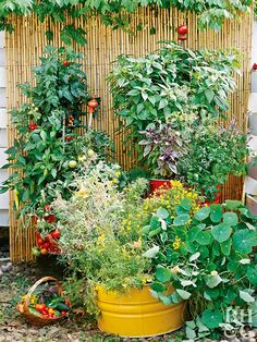 Growing your own garden at home will save you money and in almost every case, the flavor and texture of the homegrown vegetables far exceed grocery store produce. Start planning your vegetable garden with our tips. #gardening #vegetablegarden #gardeningtips