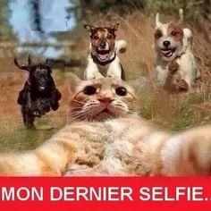 Mon dernier selfie par le chat !!!