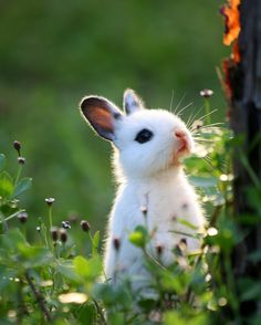 Baby white bunny in the woods