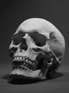 Skull By Adam Skutt Related posts: Human Skull Replica Vector black and white illustration of. Skull Reference, Anatomy Reference, Drawing Reference, Pose Reference, Drawing Tips, Arte Com Grey's Anatomy, Skull Anatomy, Anatomy Drawing, Anatomy Art