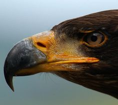 Eagle | Just Perfect
