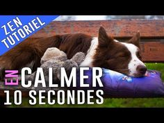 Voici COMMENT CALMER son CHIEN en 10 Secondes - YouTube Education Canine, Cesar Millan, Cairn Terrier, Terriers, Westies, Border Collie, Yorkie, Boxer, Dogs And Puppies