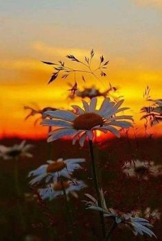 """Wise quote- the beauty of nature: """"There's a sunrise and a sunset every single day, and they're absolutely free. All Nature, Amazing Nature, Beautiful World, Beautiful Images, Beautiful Flowers, Beautiful Sunrise, Belle Photo, Nature Photos, Pretty Pictures"""