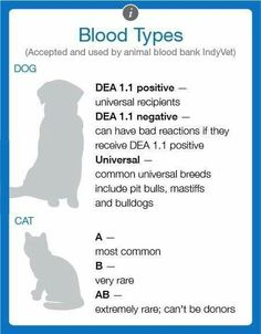 Feline Cat Canine K9 Dog blood types pet vet first aid pets