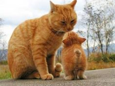 Mommy's kiss