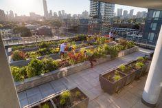 Organic Gardening For Dummies Code: 7994209511 Landscape Mode, Landscape Architecture, Landscape Design, Courtyard Pool, Rooftop Garden, Landscaping Software, Garden Landscaping, Amazing Gardens, Beautiful Gardens