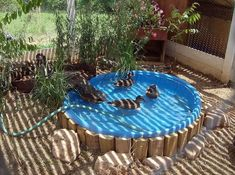 Duck pool: Pool is large with smaller diamter pit dug out underneath. Hole drilled into center of pool withordinary bahtub plug in it. Drain every day, rinse and refill. Raising Ducks, Raising Chickens, Kiddie Pool, My Pool, Backyard Farming, Chickens Backyard, Duck Coop, Duck House, Small Backyard Pools