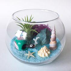 The Mexico Series: Sayulita Snail Terrarium Kit by TerrariumKits Terrarium Kits, Air Plant Terrarium, Blue Crafts, Glass Vessel, Bobble Head, Air Plants, Snail, One Pic, Sea Shells