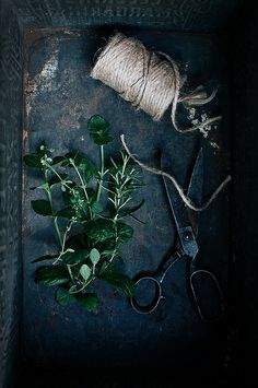 Herbs by Call me cupcake, via Flickr