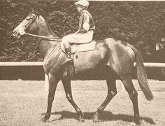 Hi Jinx, winner of the 1960 Melbourne Cup