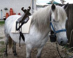 pony vogn hook up