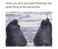 Best friend things (18 photos)