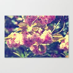 Summer almond blossoms Stretched Canvas by Tanja Riedel - $85.00