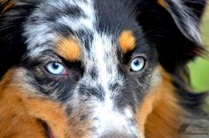 #dogsoftwitter #doglover #dogphotography #dogphotos