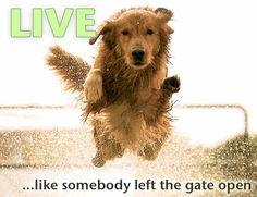 Live life |