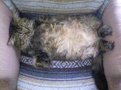 naja-cat-belly02