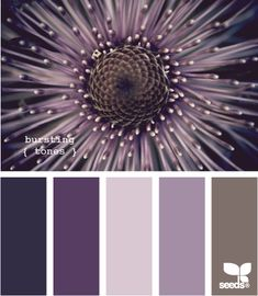 Color palette bursting purple