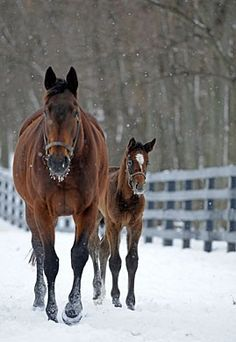 Winter on the Ranch All The Pretty Horses, Beautiful Horses, Animals Beautiful, Cute Animals, Snow Scenes, Winter Scenes, Horse Pictures, Animal Pictures, Winter Horse