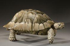 Delphin Massier Turtle