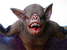 Cool Vampire bat puppet Vampire Bat, Wicked Witch, Animal Sculptures, Dracula, Vampires, Bats, Witchcraft, Reptiles, Puppets