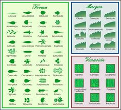 Identificar árboles a partir de las hojas