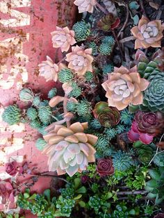 Band Saw succulents | Flickr - Photo Sharing!